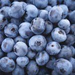 [ブルーベリー]古来より人気の品種・ティフブルー